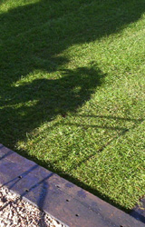 Lawns and Turfing, Seeding, Grass